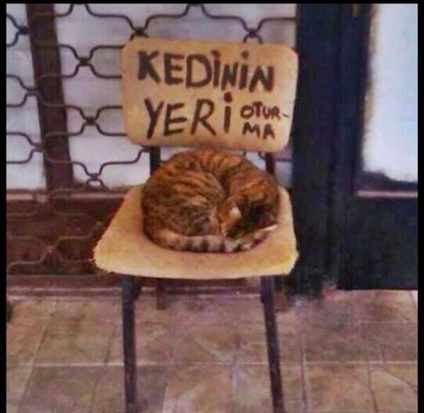 Kedinin Yeri