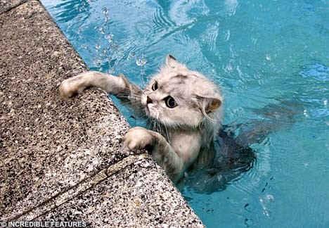 Kedi Sahibi Beş Kedisine Yüzmeyi Öğretiyor