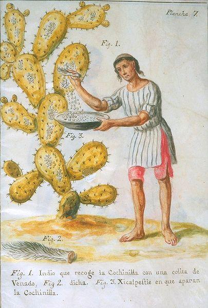 Bir Hintli Geyik Kuyruğu ile Cochineal Böceği Toplarken<br />  José Antonio de Alzate y Ramírez (1777)