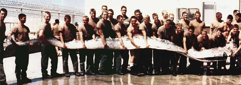 7 metre boyundaki dev kürek balığını tutan ABD askerleri. Eylül 1996, San Diego, Kaliforniya