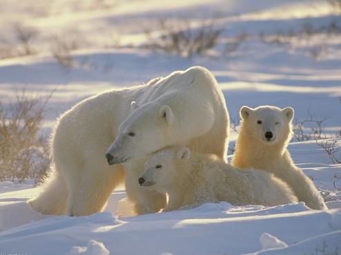 Nesli Tükenmekte Olan Hayvanlar ve Alınan Önlemler