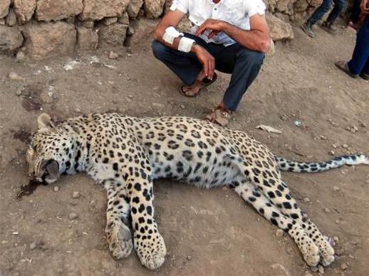 Nesli Tükenen Hayvanlar (Türkiye'de ve Dünya'da)