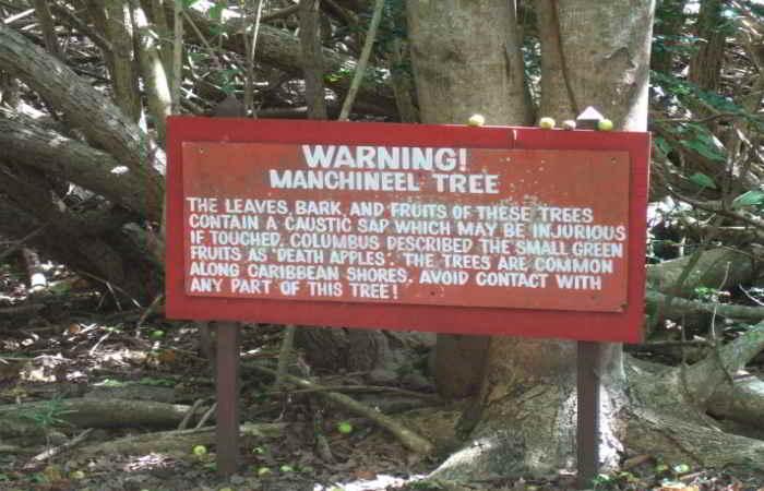 Manşinel ağacı için konulmuş bir uyarı tabelası