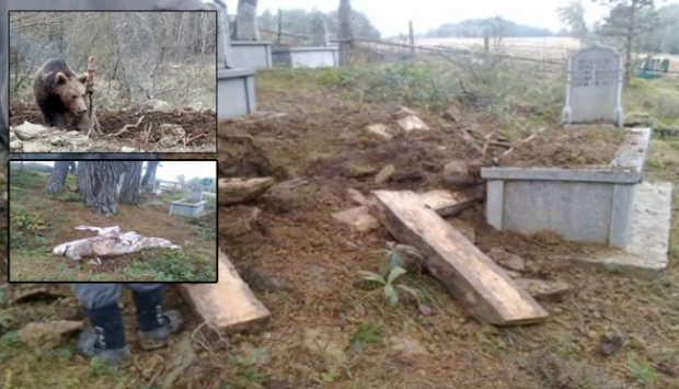 Mezarlığa Dadanan Ayı Ceset Çaldı