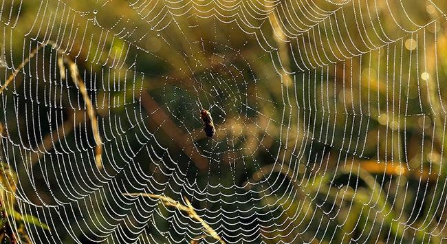 Örümcek ağının 'şifresi'