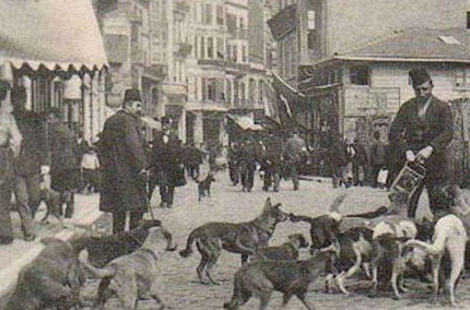 Osmanlıda Hayvan Sevgisi ve Hayvan Hakları