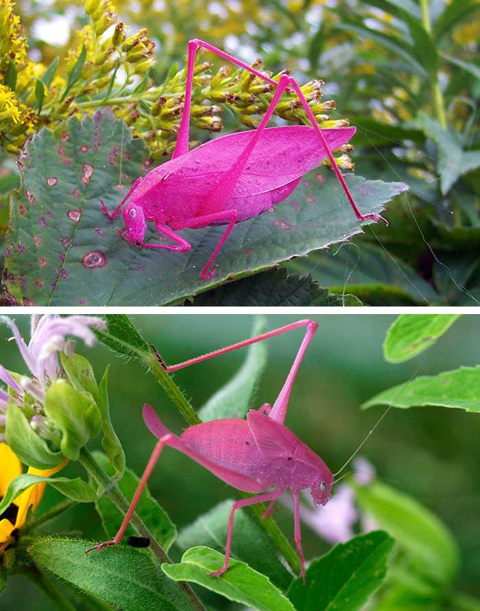 Sıradışı Tuhaf Renkli Hayvanlar