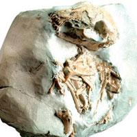 <b>Yaş:</b> 30 milyon yıl