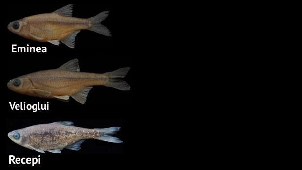 RTEÜ akademisyenleri 3 yeni balık türü keşfetti