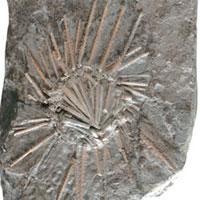 <b>Yaş:</b> 295 milyon yıl