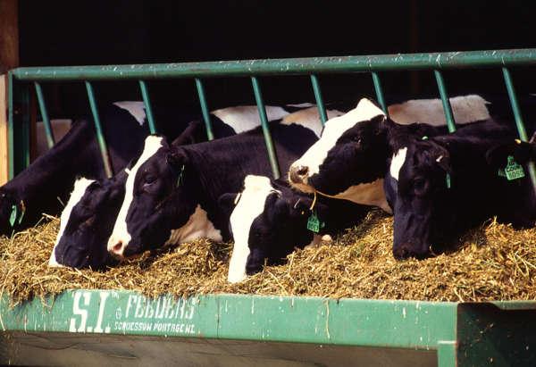 Etik veganlar, hayvanların insanlar tarafından kaynak olarak kullanılmasına karşı çıkarlar.