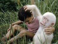 Albino Hastas� Hayvanlar